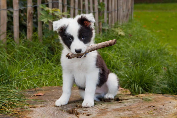 Charismatic leadership like puppies, highly irresistible
